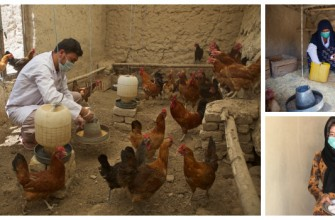 HAND IN HAND AFGHANISTAN LAUNCHES LAYER POULTRY VALUE CHAIN PROJECT