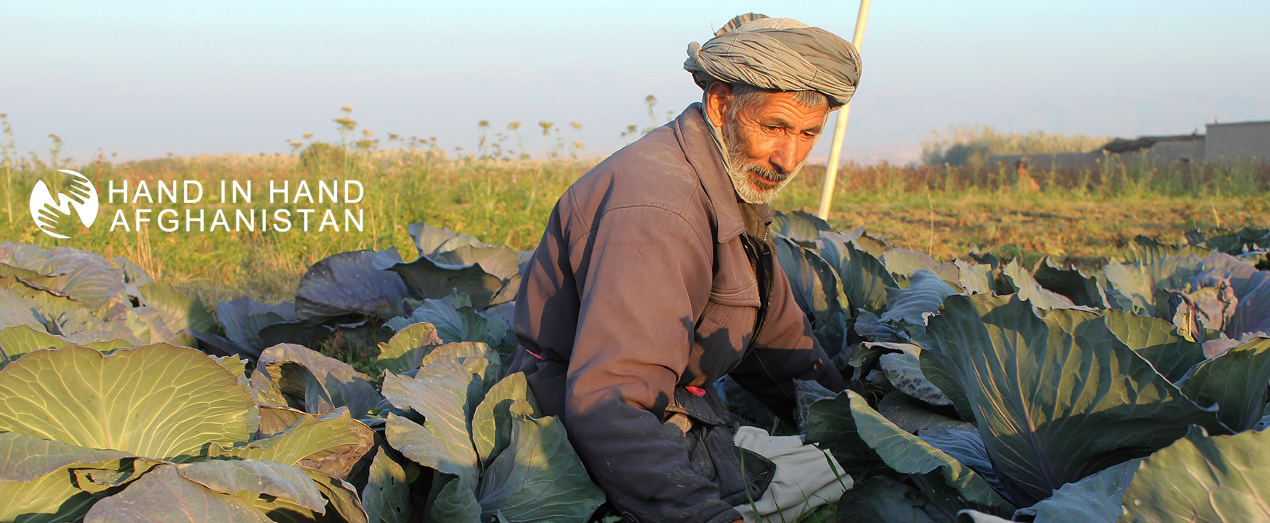 Mohammad-Mohsin-Karbalayi-Wahdat-Group-Vegetable-Producer-Sholgara-District