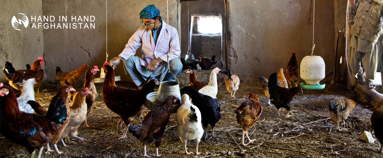 Raziq-Poultry-Farmer-Qaran-Tuqay-Village-Kaldar-District-