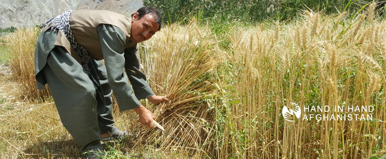 1.-Hussain-Agricultural-farmer-hosh-billage-balkhab2