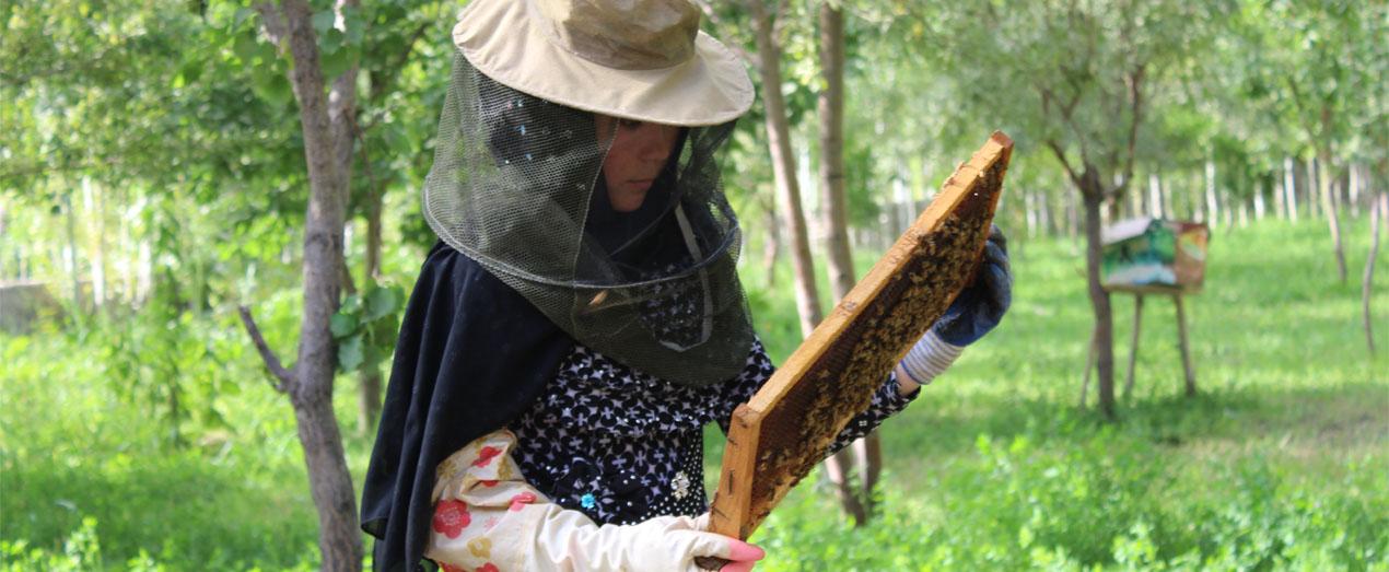 Rahima-member-of-Etifaq-SHG-from-Kelkaba-village-of-Balkhab-Beekeeping-yes